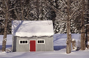Typical wooden hut in forest covered in snow, Tewkesbury, Quebec, Canada, December 2001  -  Eric Baccega