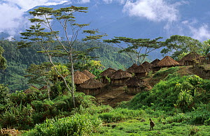 View of Yali village of Serkasi, with thatched huts,  West Papua, former Irian-Jaya, Indonesia, August 2002 - Eric Baccega