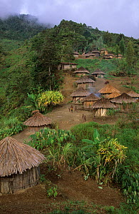 View of Yali village of Uldam, with thatched huts, West Papua, former Irian-Jaya, Indonesia., August 2002 - Eric Baccega