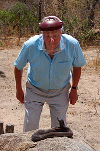 Sir David Attenborough approaching a Mozambique Spitting Cobra (Naja mossambica) prior to having venom spat at his face, whilst filming for BBC television series Life in Cold Blood. Houdspruit, South...  -  James Brickell