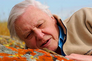 Sir David Attenborough watching a Side blotched lizard (Uta stansburiana) on rock, Santa Nella, California, USA. For BBC television series ^Life in Cold Blood^, April 2006  -  James Brickell