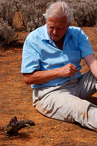Sir David Attenborough watching a Gidgee skink, (Egernia stokesi) performing a threat display in Adelaide, South Australia, whilst filming for BBC television series Life in Cold Blood. November 2006  -  James Brickell