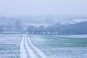 Rolling farmland with track across field during a winter blizzard, Morchard Bishop, Devon, England. February 2009 - Adam Burton