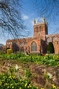 Church of the Holy Cross, the parish church of Crediton in early Spring, Devon, England. April 2009  -  Adam Burton
