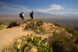 Two hikers on the summit of Wasson Peak in Saguaro National Park. Arizona, USA, March 2009, model released  -  Kirkendall-Spring