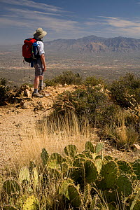 Hiker on the summit of Wasson Peak in Saguaro National Park. Arizona, USA, March 2009, model released  -  Kirkendall-Spring