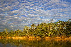 Landscape of river and trees, Pantanal, Brazil  -  Piper Mackay