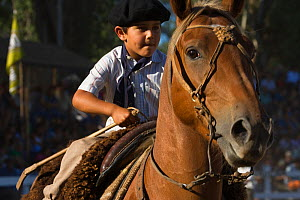 A young tradionally dressed gaucho (cowboy) rides a horse (Equus caballus) during the parade of the Fiesta De La Patria Gaucha, Tacuarembo, in Uruguay, April 2008 - Kristel Richard