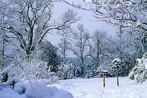 Garden in heavy snow with bird tables. Sussex, England, UK, Winter.  -  Stephen Dalton
