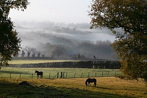 A view to the South Downs over Sussex Weald in early November, UK  -  Stephen Dalton