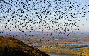 The Oxbow and the Connecticut River seen from the Skinner Mountain House in Hadley, with a flock of Grackles filling the sky. Skinner State Park, Mount Holyoke, Massachusetts, USA, August 2007. - Jerry Monkman