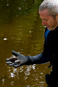 Mussel researcher Ethan Nedeau holding three species of freshwater Mussels (Mytillus genus) from the Ashuelot River. Keene, New Hampshire, USA, September 2006.  -  Jerry Monkman
