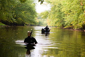 Researchers searching for freshwater mussels in the Ashuelot River, Keene, New Hampshire, USA, September 2006.  -  Jerry Monkman