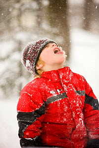 Young boy catching snowflakes in his mouth during a snowstorm in Portsmouth, New Hampshire, USA, January 2009. Model released.  -  Jerry Monkman