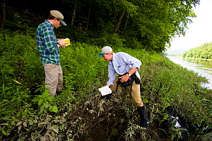 Nature Conservancy employees cutting back Japanese knotweed (Fallopia japonica) in an invasive species eradication effort on the TNC's Silverweed Seep preserve in Plainfield, New Hampshire, USA.  -  Jerry Monkman