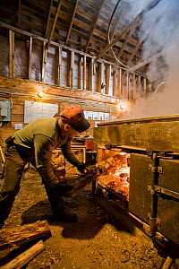 Man stoking the fire in the sap evaporator of the sugar house at Sugarbush Farm in Woodstock, Vermont, USA, April 2008.  -  Jerry Monkman