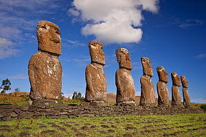 Stone sculptures / Moai at Ahu Ahivi, Easter Island, South Pacific, October 2009  -  Doug Allan
