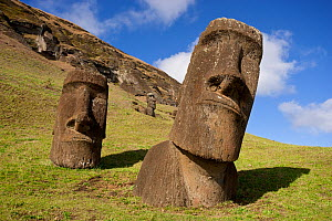 Stone head sculptures / Moai at Rano Raraku, Easter Island, South Pacific, October 2009  -  Doug Allan