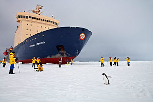 Tourists and Russian icebreaker ship with Adelie penguin in Ross Sea, Antarctica. December 2009  -  Sue Flood