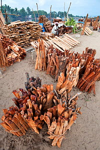 Stacks of illegally collected wood lying on the quayside in Maroantsetra. From the region of Masoala National Park, north east Madagascar. November 2009.  -  Nick Garbutt