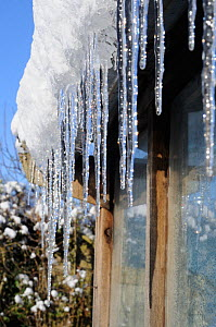 Icicles hanging from on greenhouse roof, Norfolk, UK, December 2009  -  Gary K. Smith