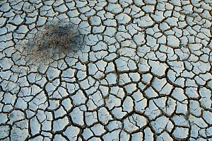View of the cracked earth, during drought, Kaloni, Lesbos, Greece  -  Edwin Giesbers