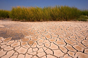 Cracked earth during drought,  Lesbos, Greece  -  Edwin Giesbers