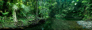 Jungle stream and rainforest, Daintree National Park, Queensland, Australia, December 2008  -  Neil Lucas