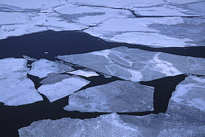 Aerial view of  ice conditions between Prince Edward Island and the Magdalen Islands in the Gulf of St. Lawrence, . Due to warmer-than-normal ambient temperatures during the winter of 2005-2006, sea i...  -  Jenny E. Ross