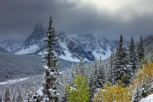 The Valley of the Ten Peaks, after recent snowfall, Banff National Park, Alberta, Canada. October 2009  -  David Noton