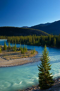 Athabasca River near Jasper, Jasper National Park, Alberta, Canada. September 2009 - David Noton