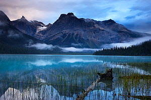 Emerald Lake at dawn with the peaks of the President Range beyond, Yoho National Park, British Columbia, Canada. September 2009 - David Noton