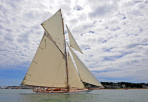 "Gaff cutter ""Mariquita"" sailing at the Westward Cup Regatta, Cowes, Isle of Wight. July 2010.  -  Rick Tomlinson"