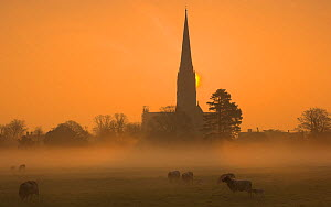 Sun rising through mist behind Salisbury Cathedral viewed across Harnham Water Meadows. Salisbury Wiltshire, England. March 2009 - Peter Lewis
