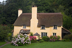 Thatched Cottage, Selworthy, Exmoor, Somerset, England. June 2009  -  Peter Lewis