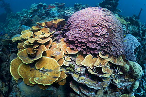"Corals adorn the wreck of the ""Kasi Maru"", a Japanese merchant ship sunk in fifty feet of water off Munda in Ironbottom Sound during a World War II bombing raid July 1943. Solomon Islands. - Georgette Douwma"
