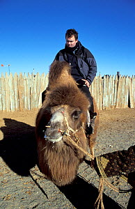 Huw Cordey, producer of 'Deserts' episode of BBC Planet Earth Series, sitting on domesticated bactrian camel (Camelus bactrianus), Gobi Desert, Mongolia, January 2004. - Huw Cordey