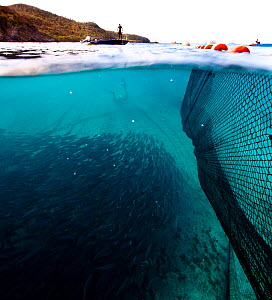 Shoal of fish beneath nets and small fishing boats in the Grenadines, Caribbean, February 2010.  -  Onne van der Wal