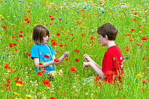 Young girl and boy playing in a wildflower meadow, Scotland, UK, July 2009 - Niall Benvie