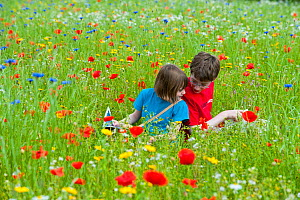 Young girl and boy playing in a wildflower meadow, Scotland, UK, July 2009. Model released - Niall Benvie