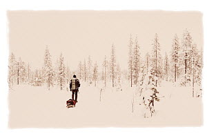 Man pulling a sledge, in winter landscape, snow on conifer trees in boreal forests, Riisitunturi National Park, Finland, February 2009  -  Niall Benvie
