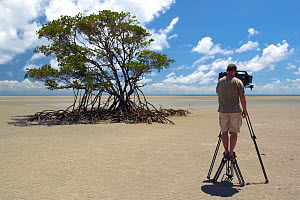 Cameraman Gavin Thurston, filming Red mangrove (Rhizophora mangle) for BBC series 'Life' Daintree National Park, Australia, December 2007  -  Neil Lucas