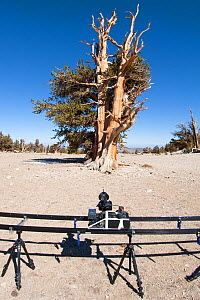 Timelapse filming equiptment, and Bristlecone pine trees (Pinus longaeva) in desert landscape, White Mountains, California, USA, October 2007 - Neil Lucas