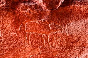 Petroglyph of an Elephant at Khaz'ali Canyon, Wadi Rum Protected Area, Jordan, April 2009 - Oriol Alamany