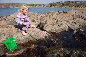 Young girl aged 5 playing in rockpool, with a fishing net, Devon, UK  Model released  -  Dan Burton
