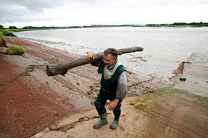 Putcher fisherman (John Powell) carrying drift wood deposited by Severn bore. The traditional way of fishing here is potentially threatened by the proposed tidal barrage. Gloucestershire, England, UK...  -  David Woodfall