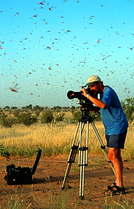 Cameraman, Mike Potts, filming desert swarm locusts (Schistocerca gregaria) flying for the 'Deserts' episode of BBC series Planet Earth, SW Mauritania, September 2004.  -  Mike Potts