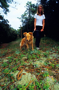 Walker and her dog encountering an Asp viper(Vipera aspis) Vend�e, Western France, Europe. Controlled conditions.  -  Daniel Heuclin