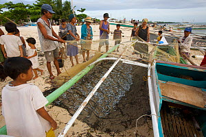 Villagers at Malapascua Island meet returning fishing boats at dawn and help collect the tiny fish from the nets. This seems to be all the fisherman are catching in this heavily overfished area.   Vis... - Tim Laman