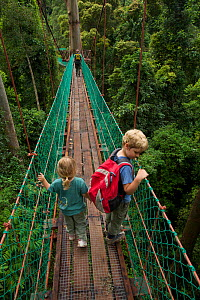 Young brother and sister (both model released) exploring a canopy rope bridge walkway through the lowland dipterocarp rainforest in Borneo. Danum Valley Conservation Area, Sabah, Malaysia, July 2007  -  Tim Laman
